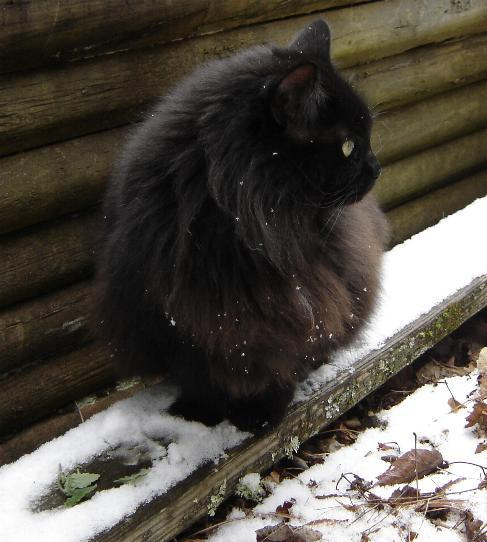catnip-in-the-snow.JPG