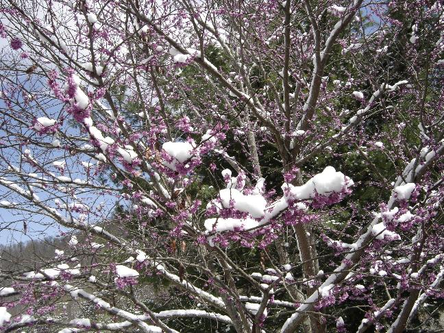snow-nest.JPG