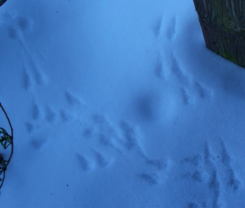 mouse-tracks.JPG