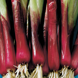 red-baron-scallion.jpg