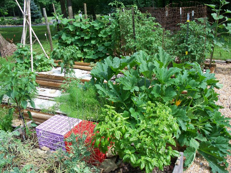 basil, squash, peppers tomatoes, butternut