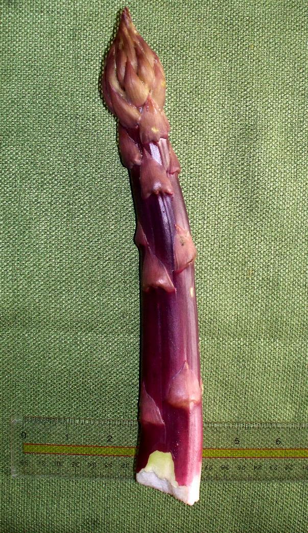 big asparagus