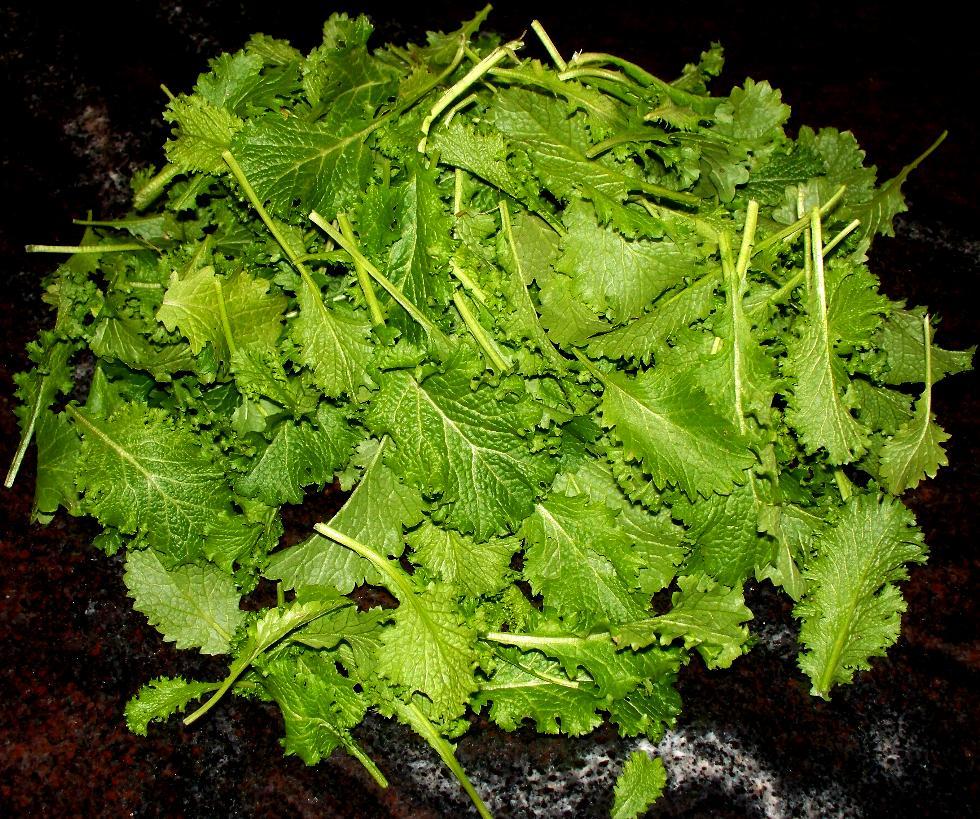 mustard greens 006