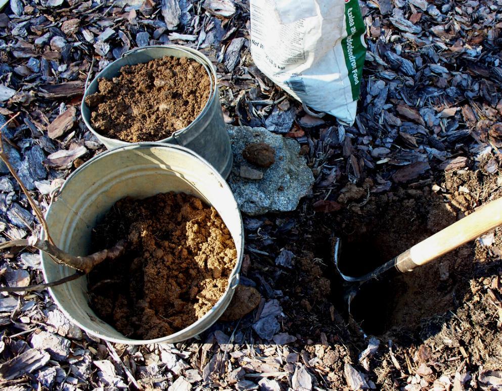 planting-process-for-exbury