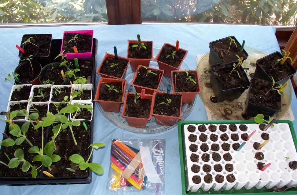 seed-pots-3-23-08.JPG