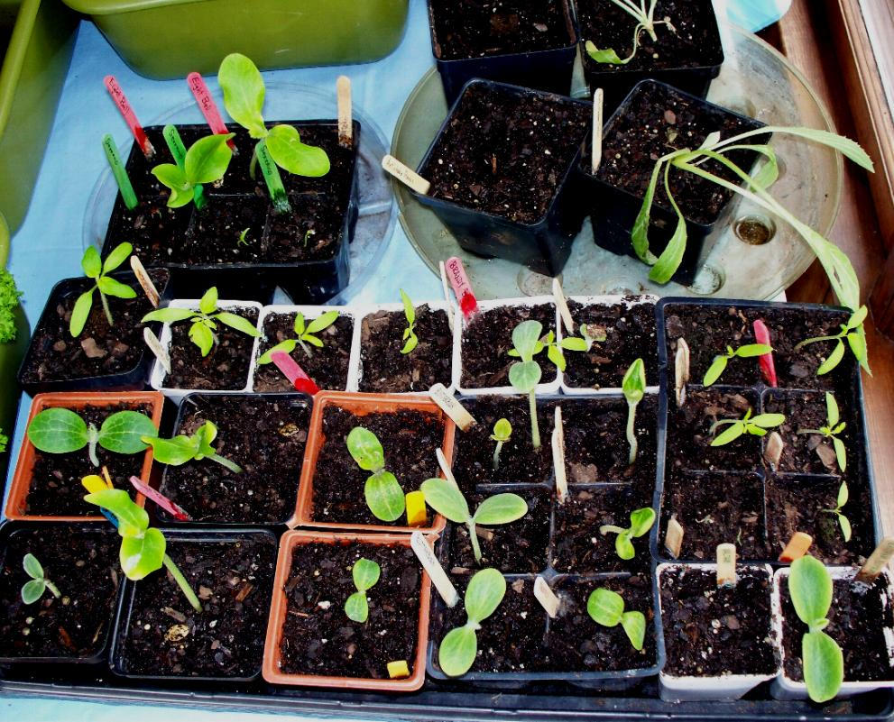 seedlings-4-13